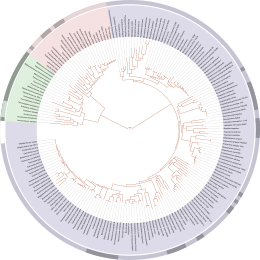 A tree of life derived from completely sequenced genomes