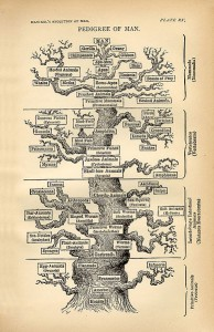Haeckel's ornately drawn tree of life.