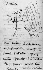 Darwin's first tree of life